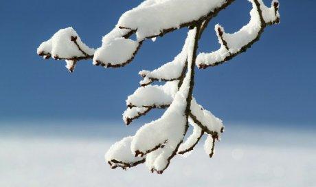 Nos conseils pour protéger vos végétaux du gel en hiver
