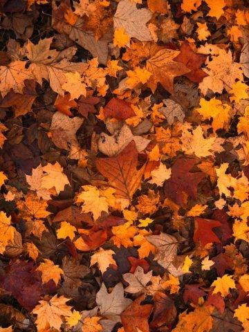 Entretien de jardin pour l'automne par votre paysagiste à Bourbon-Lancy