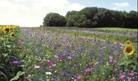 Jardinage éco-responsable par votre paysagiste à Bourbon-Lancy
