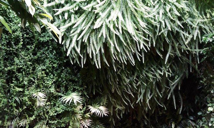 Mur végétal intérieur à Moulins