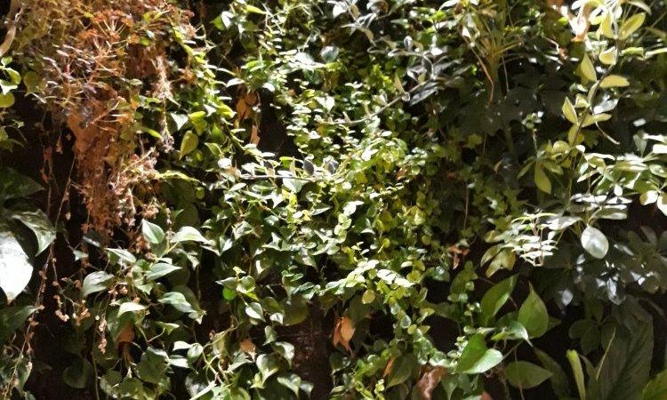 mur végétal intérieur de séparation à Bourbon-Lancy