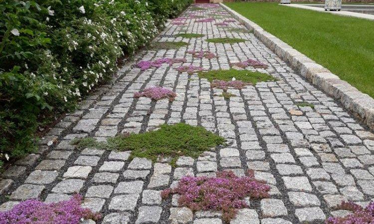 Création jardin historique environ Bourbon-Lancy