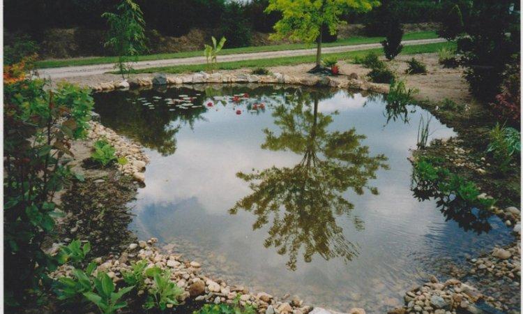 Création jardin aquatique Bourbon-Lancy